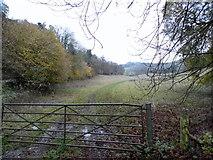 TQ1752 : Field by Headley Lane, Mickleham by David Howard
