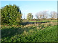 TQ3586 : Playing field near Walthamstow Marshes by Marathon