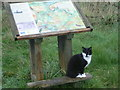 TR0161 : A cat and an information board by Marathon