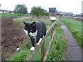 TR0161 : A cat on the Saxon Shore Way by Marathon
