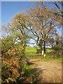 SX7976 : Woodhouse Cross by Derek Harper