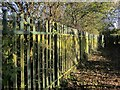 ST6376 : Fence, Oldbury Court by Derek Harper