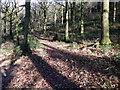 SD3586 : Yewbarrow Wood by David Brown