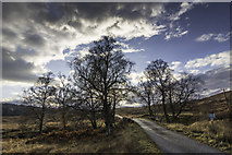 NH1101 : Bridge and winter trees by Peter Moore