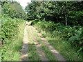 TF0822 : Track through Fox Wood by Tony Atkin