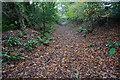 SX5458 : Park Lane by jeff collins