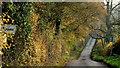 SO4817 : Lane to Welsh Newton by Jonathan Billinger