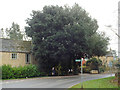 SP1720 : Holm Oak at the bend of Station Road, Bourton-on-the-Water by Robin Stott