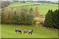 NZ1448 : Horses in field below railway path by Trevor Littlewood
