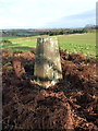 SJ7322 : Puleston Hill trig pillar by Richard Law