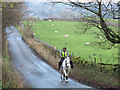 SD9864 : Horse on Grass Wood Lane by Stephen Craven