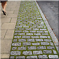 SP2764 : Mossy joints in deterrent paving, West Street, Warwick by Robin Stott