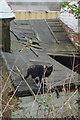 SK4743 : Cat at Bridge Farm by Stephen McKay