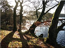 H5776 : Trees and shadows, Loughmacrory by Kenneth  Allen