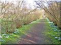 ST7475 : Snowdrop avenue at Dyrham Park by Trevor Rickard