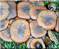 J4073 : Fungi, Belfast - November 2014(5) by Albert Bridge