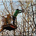 SJ9594 : Tree surgeon at work by Gerald England