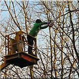 SJ9594 : Tree surgeon at work by Gerald England