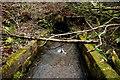 SO6113 : Cannop Brook in Concrete Trough by Nigel Mykura