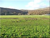 SH5840 : Sheep pasture, east of Portreuddyn Castle by Christine Johnstone