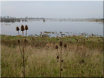 TL5392 : Early winter flooding - The Ouse Washes near Welney by Richard Humphrey