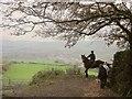 SX8179 : Horse and rider, Furzeleigh Lane by Derek Harper