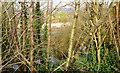J3876 : Wildlife reserve, Tillysburn, Belfast (March 2014) by Albert Bridge