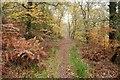 SO6009 : The Gloucestershire Way, Nagshead Plantation by Philip Halling