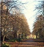 SK6464 : Rufford Abbey Country Park, Rufford, Notts. by David Hallam-Jones
