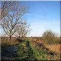 TL5669 : Baker's Fen Drove by John Sutton