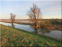 TL4279 : Reflections in Old Bedford River by Hugh Venables