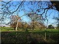 TF8423 : Parkland near Kimpton Ash Farm by Richard Humphrey