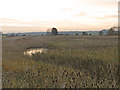 TM4698 : Teasels and wetland by Adrian S Pye