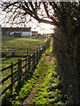 SK4960 : Sunlit footpath by Alan Murray-Rust