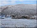 NT3448 : Sheep fold at Wolf Cleugh by M J Richardson