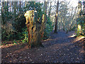 SU8265 : Old tree, Heath Lake Woods by Alan Hunt