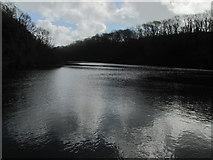 SR9694 : Bosherston Lily Pond by Matthew Chadwick