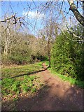 SX9363 : Path on Lincombe Slopes by David Smith