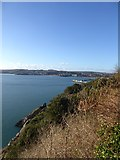SX9262 : Cliffs above Saddle Rock with Torbay beyond by David Smith