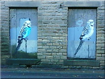 SE0026 : Budgies on boarded-up windows by Humphrey Bolton