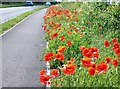TF0922 : Wayside poppies on the A15 near Bourne, Lincolnshire by Rex Needle
