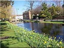 TF0919 : Springtime along the Bourne Eau at Bourne, Lincolnshire by Rex Needle
