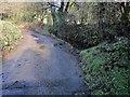 SX2968 : Stream occupying lane, Woolston by Derek Harper