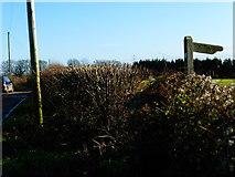SU6514 : Footpath sign on Pitt Hill Lane by Shazz