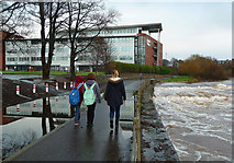 NS3421 : On The River Ayr Way by Mary and Angus Hogg