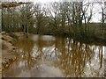 TQ2927 : Pond, Little Tolls Shaw by Simon Carey