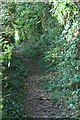 TR3153 : Lonely Lane along west side of Updown House park by Hugh Craddock