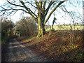 SU2373 : Bridleway to Whiteshard Bottom by Vieve Forward
