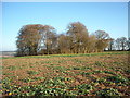 SU2473 : Lewisham Castle by Vieve Forward