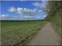 TQ8554 : On North Downs Way, SE of Hollingbourne by Colin Park